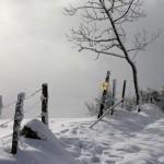 8 trail Haut-cantal 2-2 ambiance